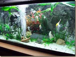 akvarium_halak