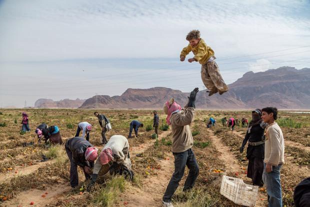 syrian-refugees-pick-tomatoes-jordan-620