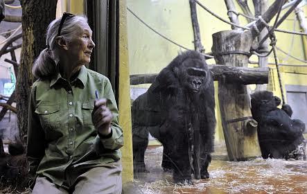 Jane Goodall brit főemlőskutató és ENSZ-békenagykövet Tele