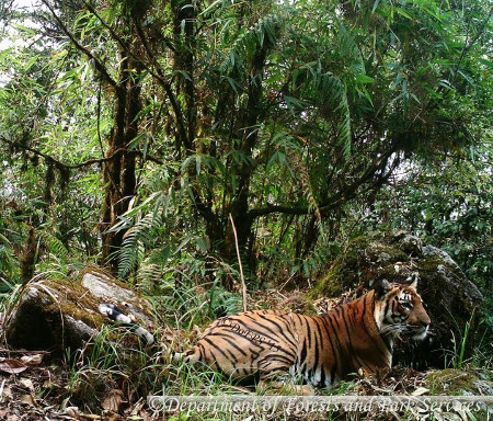 Bhutan Tiger Image_DoFPS, MoAF_1_450x