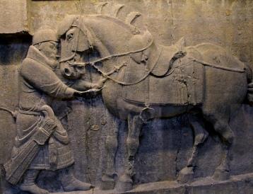 Taj-cung horses