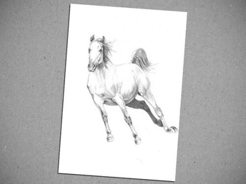 Szunyoghy András: ló