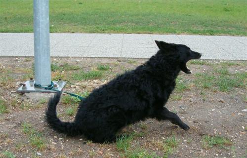 kutya egyedül