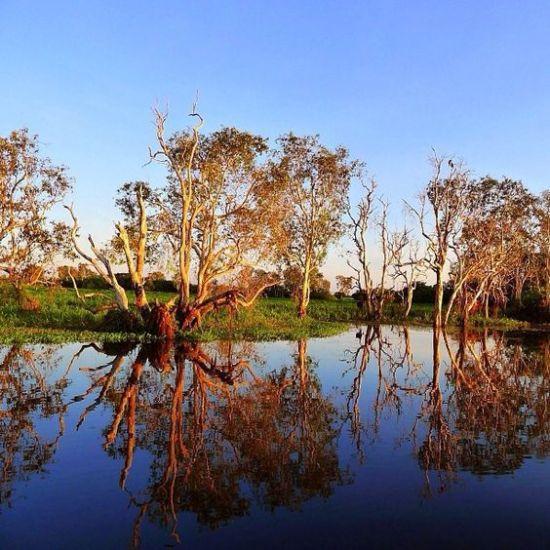 teafa a Kakadu Nemzeti Parkban