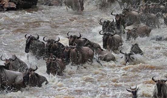 átkelés a Mara-folyón