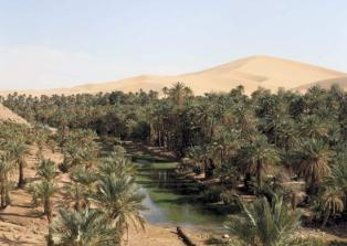 oasis in Djanet