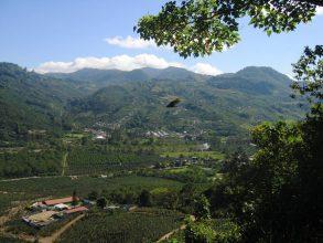 Kávéültetvény, Costa Rica