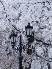téli szépség