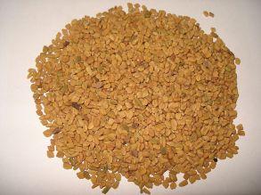 Trigonella foenum-graecum semen