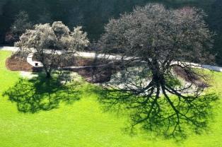 Extrém fa-árnyék a zölden – photo:flickr.com/batiks