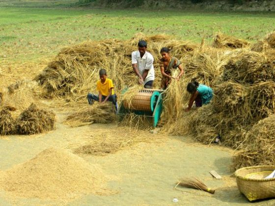 Bangladesh, agriculture