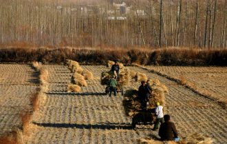 Chiba Harvest