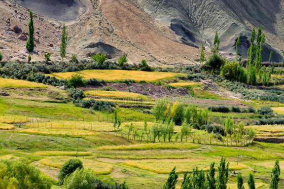 Ladakh landscape, agriculture