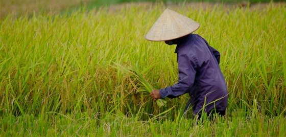 Women of Rice Farm, China