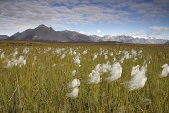 Arctic National Wildlife Refuge, Alaska