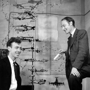 Crick & Watson with their DNA model, ...