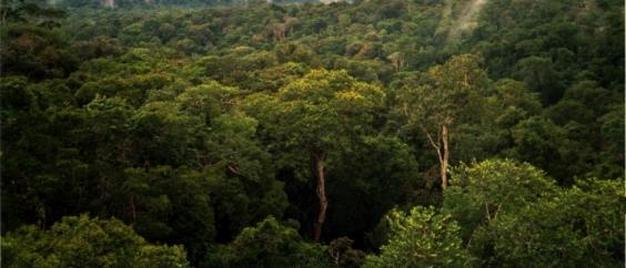 Amazo Forest at Manaus