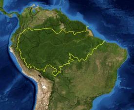 Amazo Rainforest