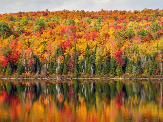 Canadien maple forest in autumn