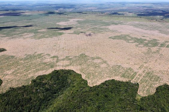 Deforested rainforest in the Amazon