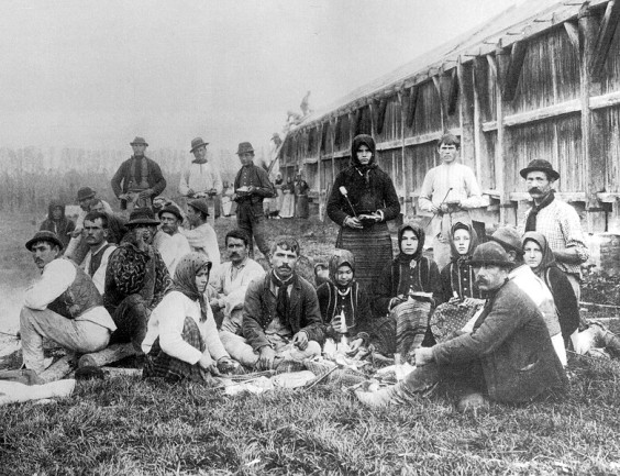 Bacon field workers, 1901