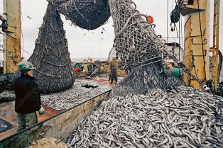 Emptying fishing nets on a fishing trawler in the North-East Atlantic.