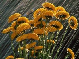Rain soaked flowers