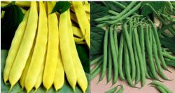 various green beans