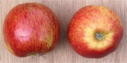 Apple (Jonagold)