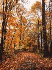 Falling autumn tree leaves
