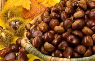 Fruit of Sweet Chesnut
